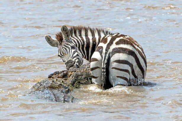 pay-lucky-zebra-escape