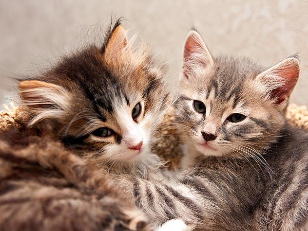 112809642-fostering-cats-kittens-632x475.jpg